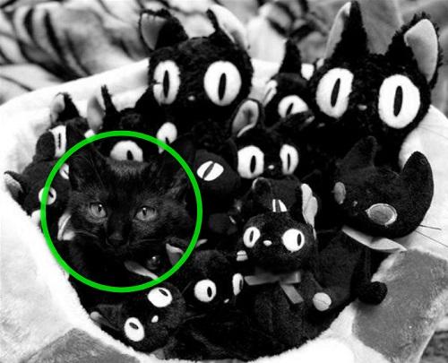 cat02a.jpg